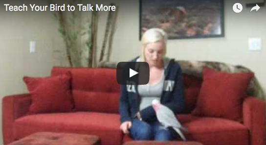 Teach Your Parrot to Talk More