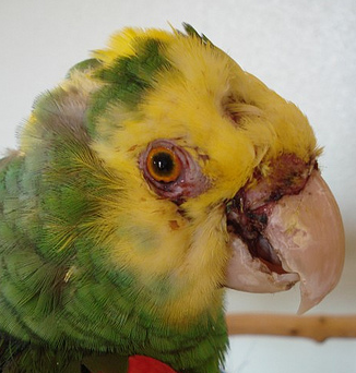 Amazon Parrot Fight: a Lesson For Us All