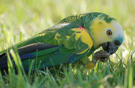 Ground Foraging Ideas For Parrots