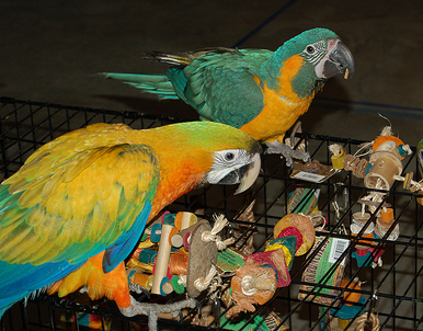 Making Your Own Parrot Toys