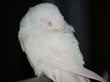 Are Your Birds Getting Enough Sleep?