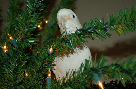The Night Before Christmas (Cockatoo Style)