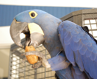 Do Parrots Know What Foods Are Best For Them?