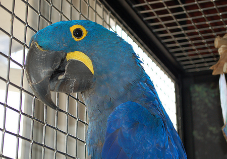 Captive Parrot Lifespans Are DECLINING!?