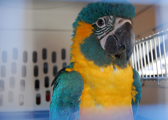 Should Birds Be Allowed in Pet Stores?
