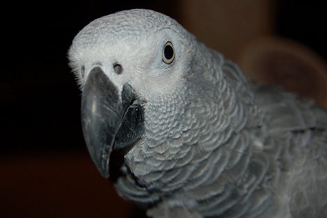 2 Questions to Ask Yourself Before Buying a Parrot
