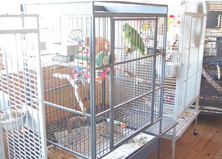 5 Common Mistakes Made By New Parrot Owners