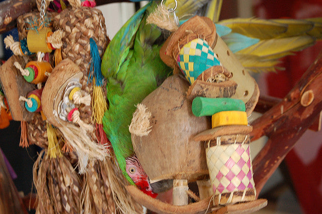Unsafe Bird Toys: How To Avoid Them
