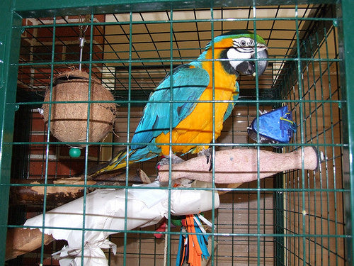 Tips For Keeping Your Bird Busy And How To Make Parrot Toys Last