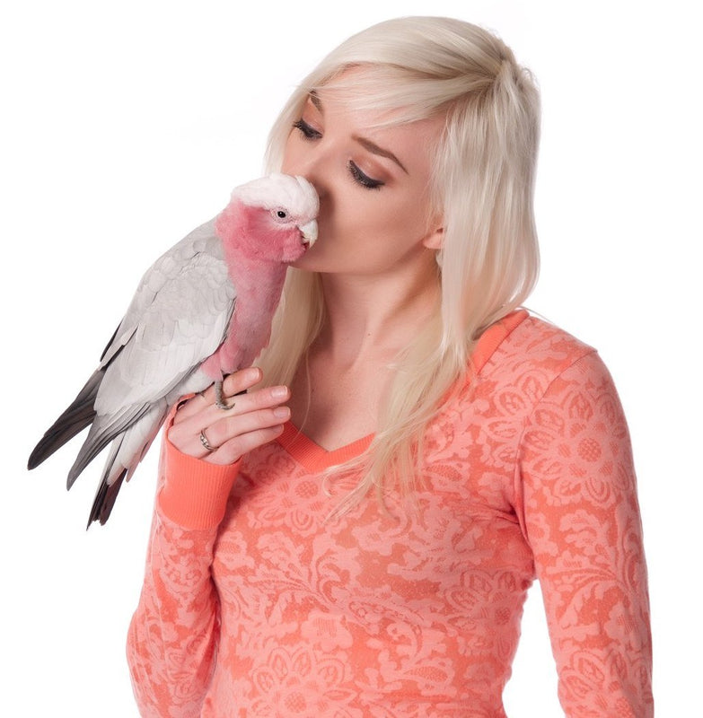 Parrot Training Courses