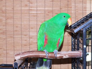 Tips To Help You Recover A Lost Bird