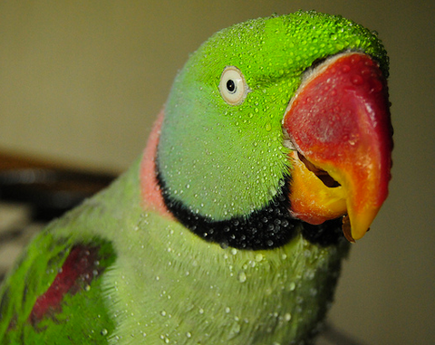 What Feathers Tell You About Your Parrot's Health