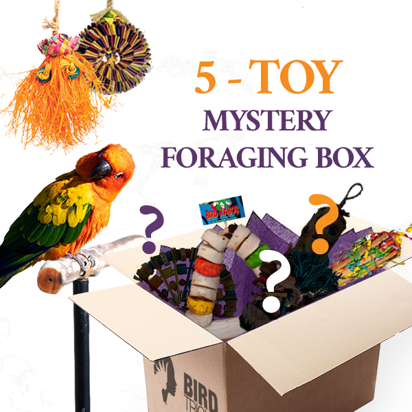 Foraging Toy Box (Bundle of 5)