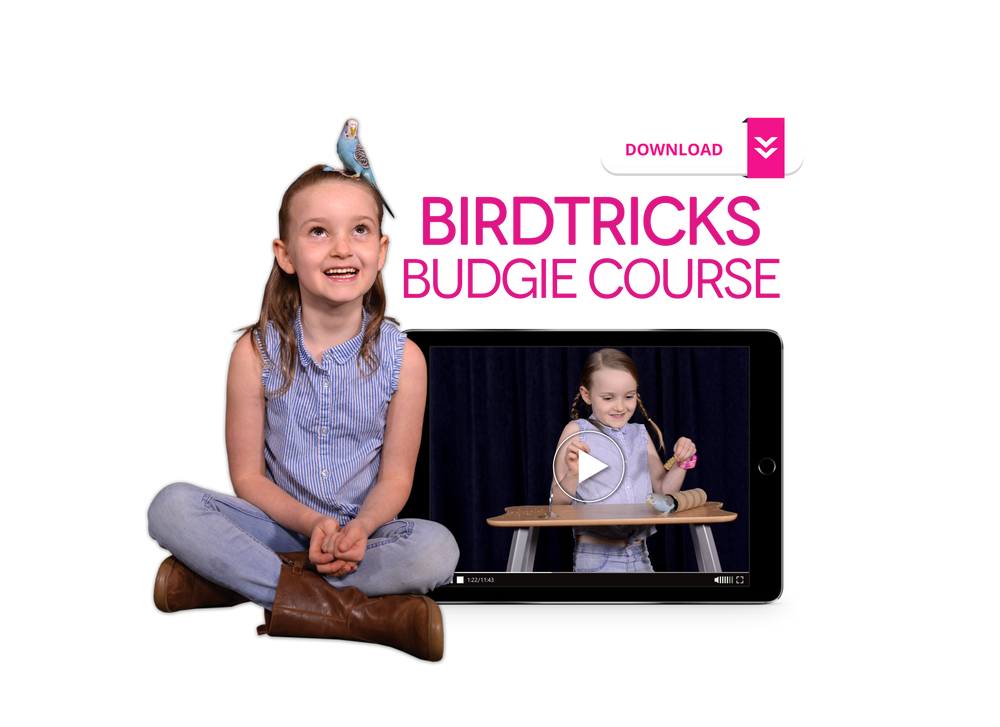 BirdTricks Training Course | The Complete Collection