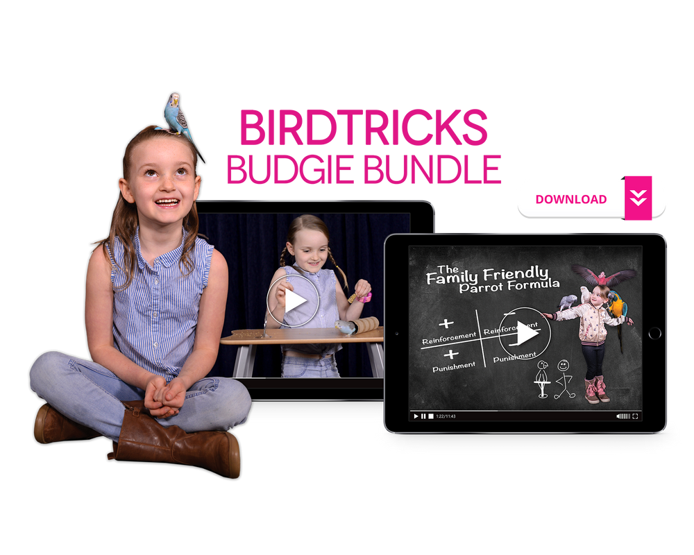 The Complete Budgie Bundle
