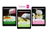 Natural Feeding System (Digital Download)