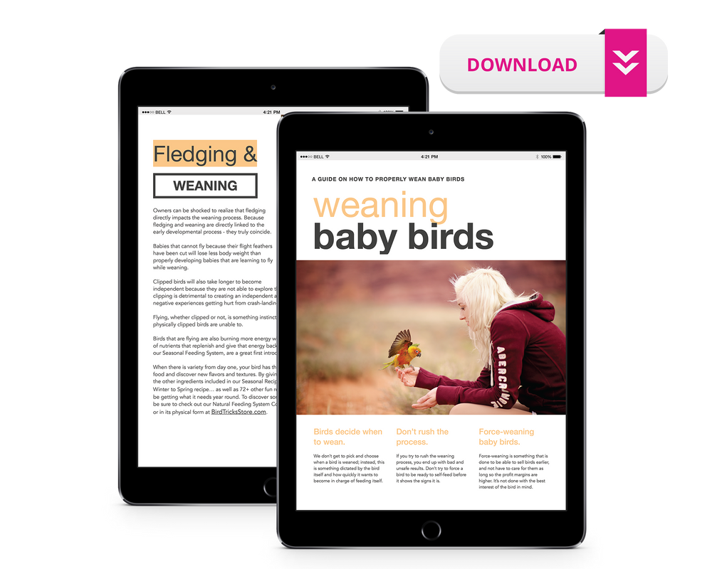 A Guide to Weaning Baby Birds
