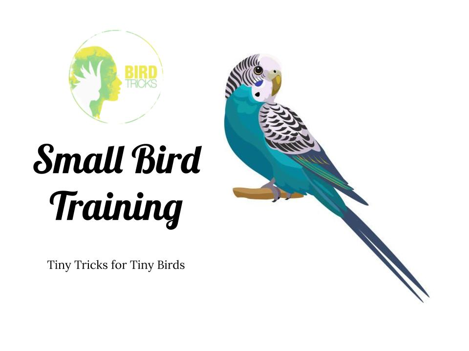 Tiny Trick Training - BirdTricksStore