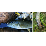 6PC Fly Fishing Insect Lures
