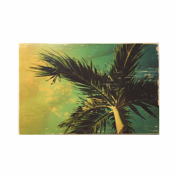 Palm Tree Wood Photo