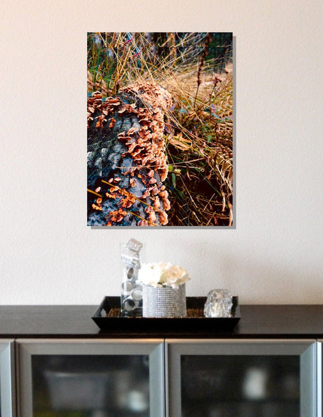 Cornucopia #10 Shenandoah Mountains Original Natural Landscape Color Photograph Large Scale Hi-Res Professionally Printed #timhovdefineart