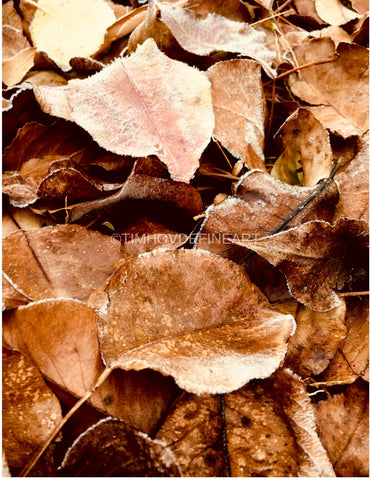 Autumn Leaves Photograph + Shenandoah Mountains Original Natural Landscape Color Photograph Large Scale Hi-Res Professionally Printed #timhovdefineart