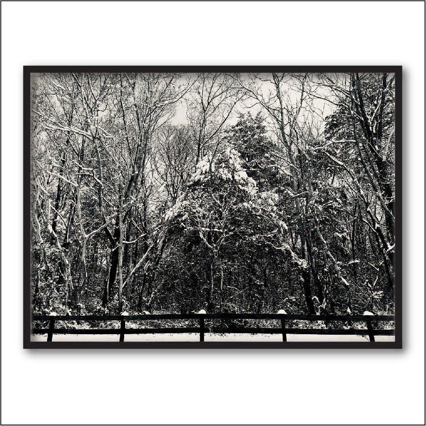 Nature Photography Print + Nature Prints + Nature + Black and White Photography + Winter Photography + Forest Photography + Shenandoah Mountain Photography + Virginia Photography + Tree Photography + Landscape Photography by #timhovdefineart
