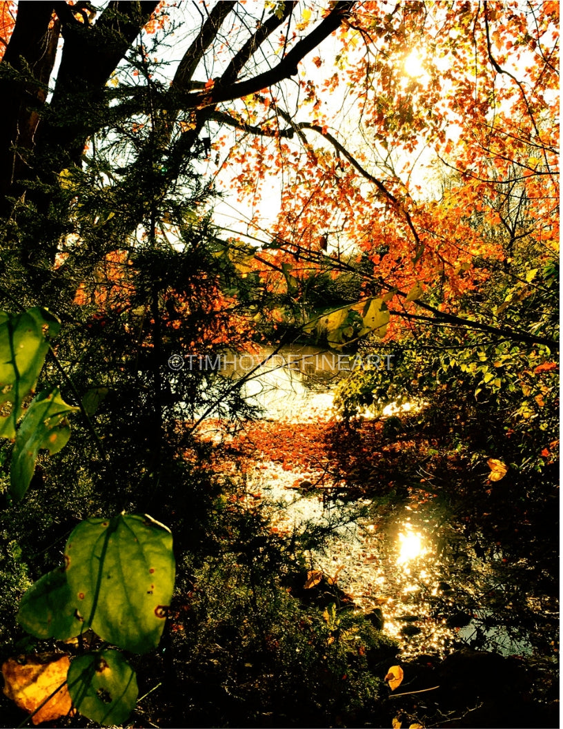 Autumn Leaves on the Pond + Color Photograph + Shenandoah Mountains Original Natural Landscape Color Photograph Large Scale Hi-Res Professionally Printed #timhovdefineart