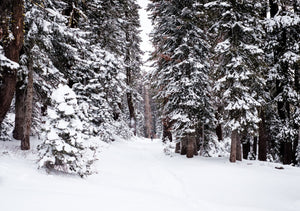 Winter Survival Tips from a Trail Running Pro