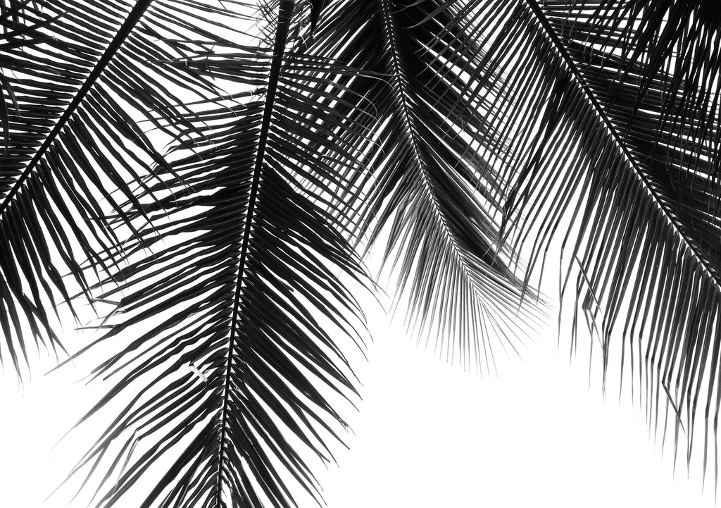 Palm Leaf Silhouette - Hustle Living