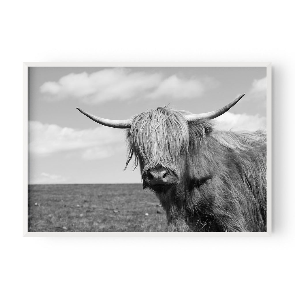 Highland Cow #1 - Hustle Living
