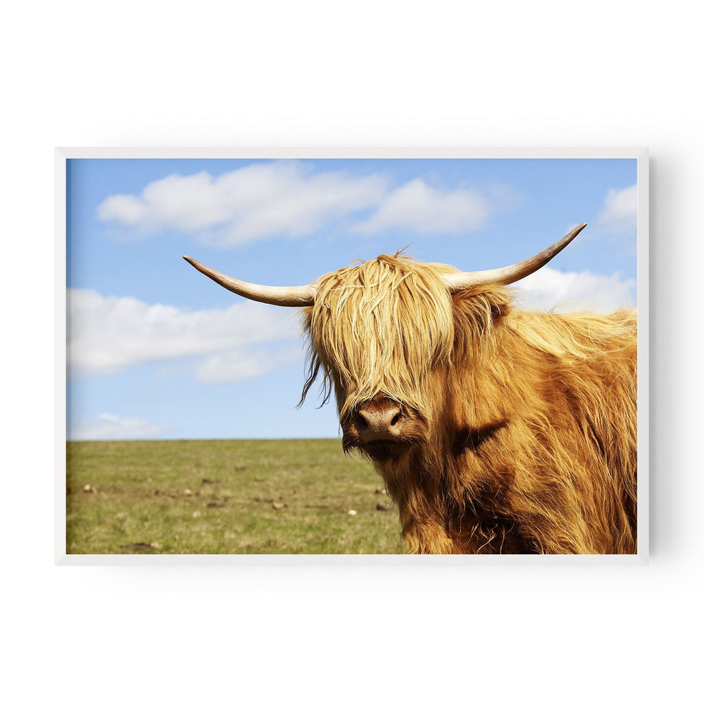 Highland Cow Colour - Hustle Living