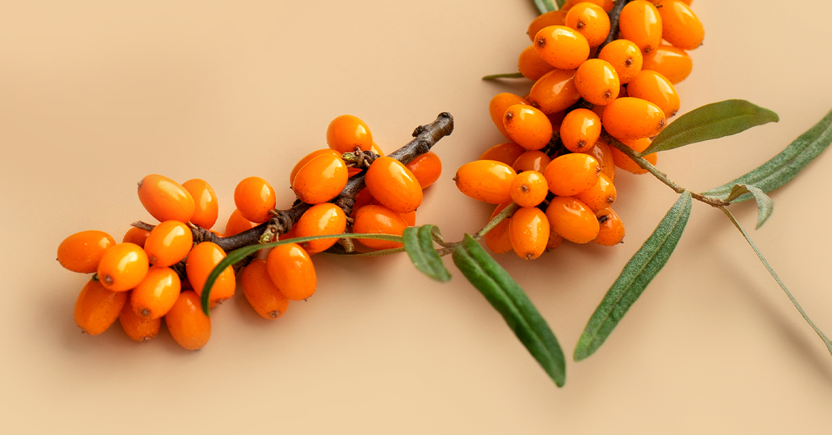 "What Makes Sea Berries The ""Liquid Gold"" Of Skincare?"
