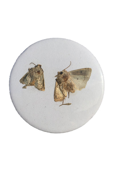 Badge Taste <br> Moths