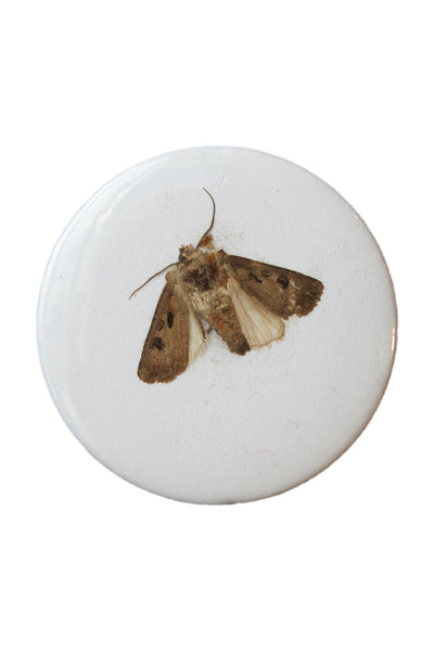Badge Taste <br> Moth