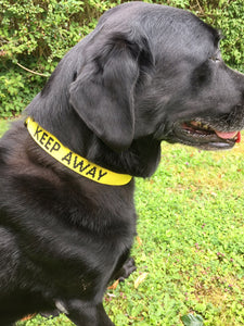 "Adjustable Dog Collar ""KEEP AWAY"""