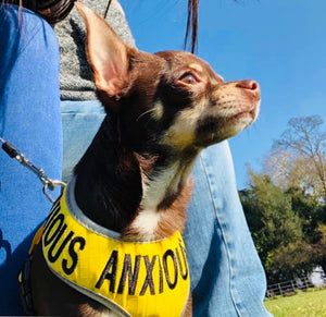"Adjustable Dog Harness ""ANXIOUS"" - Extra Small"