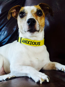 "Adjustable Dog Collar ""ANXIOUS"""
