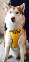 "Adjustable Dog Harness ""ANXIOUS"" - Large"