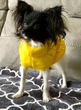 1.5Kg Papillon Dog in XS Jumper