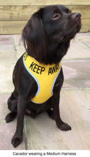 "Adjustable Dog Harness ""KEEP AWAY"" & ""ANXIOUS"" - Medium"