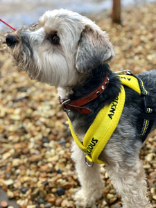 Non pull padded ANXIOUS harness size 2