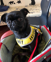 "Adjustable Dog Harness ""KEEP AWAY"" & ""ANXIOUS"" - Small V2"