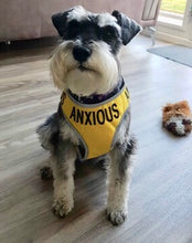 "Adjustable Dog Harness ""ANXIOUS"" - Medium"