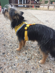 "Adjustable Dog Harness ""KEEP AWAY"" & ""ANXIOUS"" - Small"