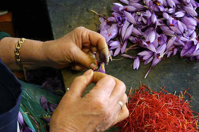 All about growing saffron from Crocus sativus bulbs