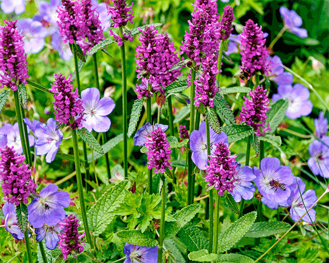 How to grow perfect Perennials from Bare Roots