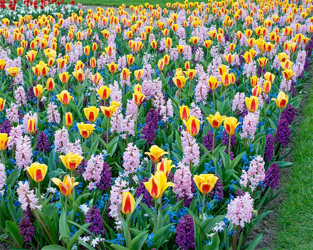 15 winning Spring Bulb planting combinations