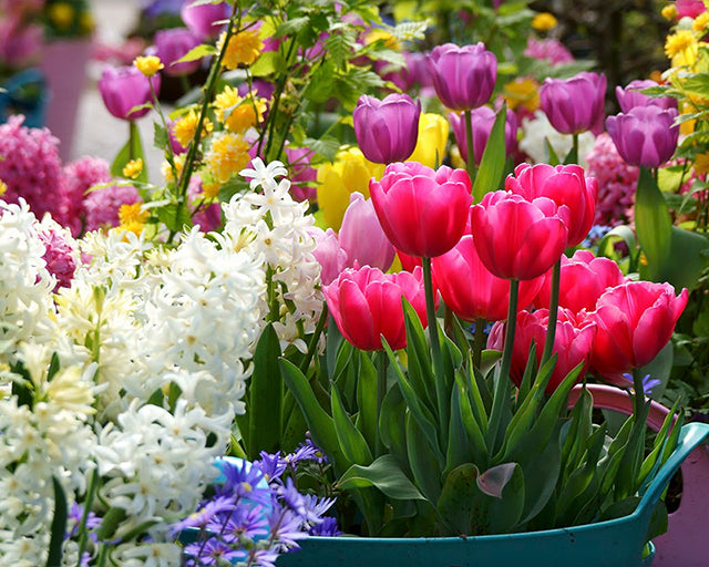 The 10 Best Spring Flowering Bulbs