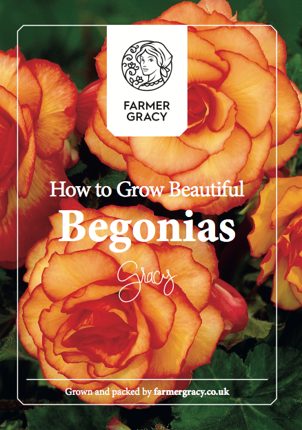 Begonia Tubers Growing Instructions
